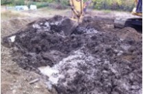 Aged Bio-Pile